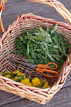 Early Spring Foraging: Plants to Gather for Food & Medicine Take the harvest basket out to enjoy the outdoors and early spring foraging for food and medicine to fill the pantry and medicine cabinet. Healing Herbs, Medicinal Plants, Organic Gardening, Gardening Tips, Potager Bio, Harvest Basket, Nature Sauvage, Edible Wild Plants, Wild Edibles