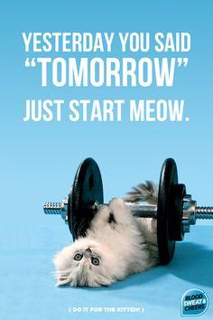 (do it for the kitten!)