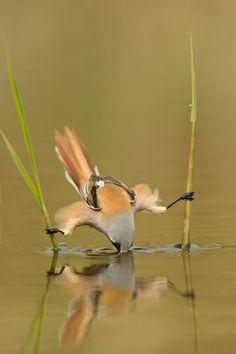 gotta hand it to this bird!!