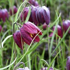 Tips  Les fleurs qui fleurissent en avril