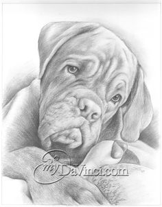 """""""I absolutely love how this came out, couldn't be happier! I will definitely be purchasing more art from this site! Beautiful Pencil Sketches, Cool Sketches, Realistic Pencil Drawings, Art Drawings, Pencil Shading Techniques, Pencil Sketch Portrait, Sketch Paper, Braids For Kids, Portraits From Photos"""