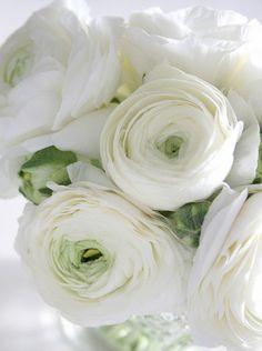 #renoncules blanches #fleurs #mariage #francefleurs