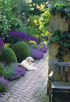 Love this garden- and the dog! Good pathway & color for narrow spot along house.