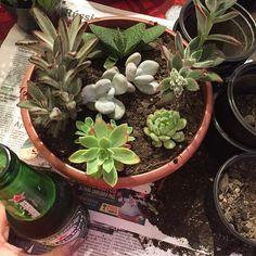 Vocês sabem pelo meu amor por plantas, flores e principalmente jardins de suculentas né? Pois é. Agora venho me apaixonando por mais um item nessa lista e estou pensando em colocar em prática. São os mini mundos/jardins ou jardim de fada. Juro, são tão fofos. E tem muita gente que vai longe criando um miniLeia mais