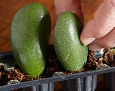 How to root succulents with leaf cuttings: Rooting succulents is easy with these simple tips. Succulent Cuttings, Propagating Succulents, Growing Succulents, Succulent Terrarium, Planting Succulents, Planting Flowers, Succulent Ideas, Succulent Plants, Growing Plants