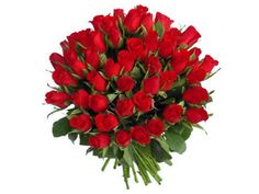 50 Fresh Red Roses, Wholesale Flowers