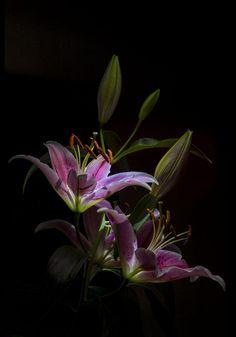 by Nasser Osman Flowers Black Background, Black Background Images, Dark Flowers, Colorful Flowers, Beautiful Flowers, Black Background Photography, Language Of Flowers, Arte Floral, Dark Backgrounds