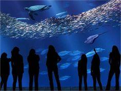 Monterey Bay Aquarium  Monterey, California