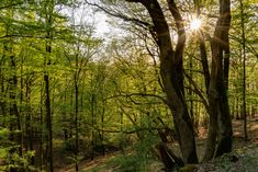 Der Wald im Rheinhardtsloch, Landschaft, aufgenommen im April