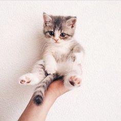 Een kitten is toch veel leuker dan een selfiestick en iPhone bij elkaar?