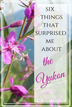 The Yukon is a fascinating place that most people know little about. Read about six things that surprised me when visiting Whitehorse, Yukon. Travel Guides, Travel Tips, Stuff To Do, Things To Do, Yukon Territory, Surprise Me, Peaceful Parenting, Stunning Photography, Canada Travel