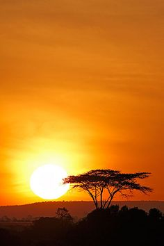Sweetwater, Kenya, Africa Totally makes me think of the Circle of Life. Being out there for days at sunrise and sunset moved me deeply. Beautiful Sunset, Beautiful World, Beautiful Places, Kenya Travel, Africa Travel, Savannah, Out Of Africa, Kenya Africa, Africa Art