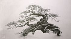 moje nová práce - atelier bonsai Element - Stránka 3
