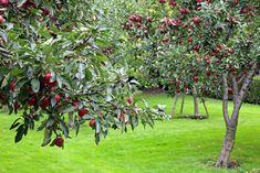 Františkánská Zahrada (Praha, Česká republika) - Recenzie Franciscan Gardens, Praha, Central Europe, Czech Republic, Connecticut, Trip Advisor, Plants, Bohemia, Plant
