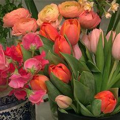 Spring Aesthetic, Flower Aesthetic, Aesthetic Photo, My Flower, Beautiful Flowers, Fresh Flowers, Wild Flowers, No Rain, Mother Nature