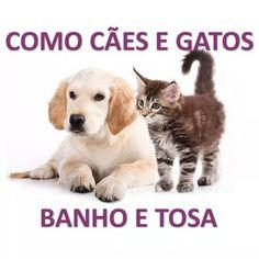 Curso 23 Dvds De Banho E Tosa Para Cães E Gatos - R$ 80,00