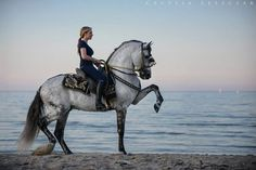 The Andalusian Horse Everything You Need to Know!