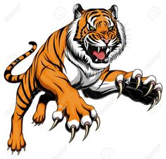 Illustration about Vector illustration of angry leaping tiger isolated on the white background. Illustration of wild, mascot, drawing - 94222026 Tiger Illustration, Tiger Drawing, Tiger Art, Tiger Cubs, Image Tigre, Art Tigre, Angry Tiger, Tiger Vector, Tiger Images