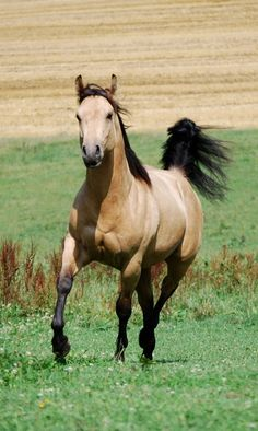 ☀Spirit ~ I want a horse JUST like this one day ! With the same exact name.