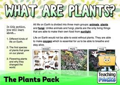 Discover the wonderful world of plants with our fantastic collection of teaching, activity and classroom display resources. Includes a child-friendly guide to plant growth, pollination, photosynthesis, classification, adaptation and much more! Science Curriculum, Science Resources, Activities, Child Friendly, Plant Growth, Classroom Displays, Photosynthesis, Wonders Of The World, Teaching