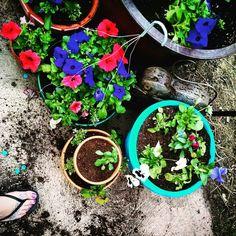 Garden toes