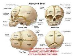 45 Best Cranial Osteopathy Amp The Involuntary Mechanism