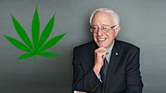 """Bernie Sanders is first candidate ever to support legalization of pot.  """"I would vote yes because I am seeing in this country too many lives being destroyed for non-violent offenses."""""""