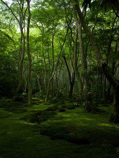 京都 Lush green woods