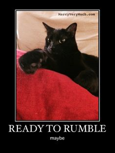 Marcy Very Much: mostly me, by penelope (kitten rumble) http://marcyverymuch.blogspot.com/2014/04/mostly-me-by-penelope-kitten-rumble.html  #cats #blackcats #kittens