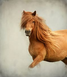 Dat mane  #horse