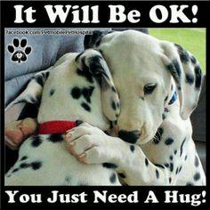 Dalmatians hugging.