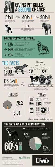 Pit bull awareness