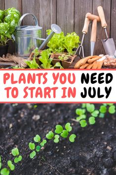 Discover the best plants for your very own backyard vegetable garden. Check out our article that shows you the easiest plants to get started. Backyard Vegetable Gardens, Potager Garden, Veg Garden, Garden Beds, Garden Plants, Pot Plants, Bonsai Garden, Outdoor Plants, Indoor Garden