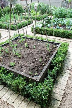 Great idea for companion planting...basil around tomatoes...marigold around brassica....repel the bugs!