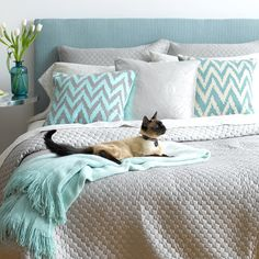 Teal  grey.. and a kitty! Pillows first, then fabric for tufted headboard then a solid color bedding