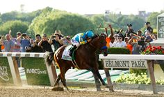 ON HORSE NATION >> The Wealthiest Horses of the Racing World