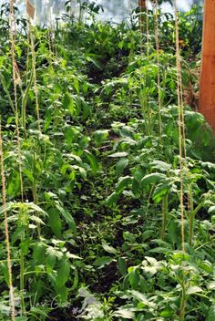 Garden Pool, Vegetable Garden, Garden Design, Diy And Crafts, Plant Leaves, Solar, Berries, Seeds, Pergola