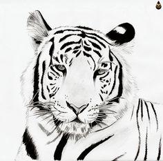 White Tiger by Maurael.deviantart.com on @deviantART