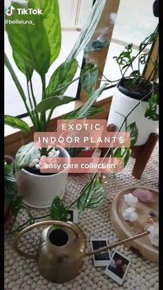 Indoor Garden, Garden Plants, Indoor Plants, Garden Bed, House Plants Decor, Plant Decor, Easy House Plants, Bedroom Plants, Dorm Plants