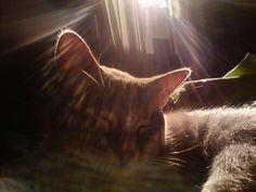 Cat over the sunshine ♪