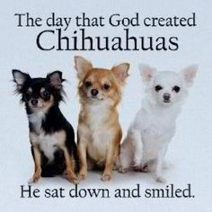 The day God created Chihuahuas...