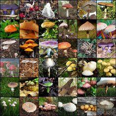 Wollen Sie professionell Pilze züchten ? | Inserate24.net Kostenlose Kleinanzeigen
