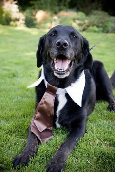 Fun photo of the wedding dog wearing a white wedding color and a brown tie - photo by Portland wedding photographer Barbie Hull