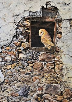 A New Home Barn Owl Painting by Alan M Hunt. Barn Owl, Barn Owls, Wildlife, Nature, Natural World, Conservation, British Barn Owls, European Barn Owls, Wings, Feathers, Flight, Rainbows, Colourful, Beautiful   Styles: Painting, Prints, Photorealism, Fine Art, Realism   Barn Owl Prints: Barn Owl Art Prints, Photorealism Barn Owl Art Prints, Fine Art Barn Owl Prints, Realism Barn Owl Art Prints, Acrylic Barn Owl Art Prints, Paint Art Prints, Canvas Barn Owl Art Prints Wildlife Paintings, Wildlife Art, Bird Paintings, Painting Prints, Art Prints, Acrylic Painting Inspiration, Owl Canvas, British Wildlife, Photorealism