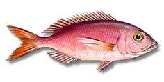 :: O Peskador - Peixes ::. Fish Collage, Fish Cake Birthday, Fish Print, Van Gogh, Fine Art, Wallpaper Ideas, Prints, Ceramics, Projects