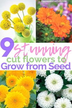 9 Cut Flowers to Grow From Seed Finding Sea Turtles is part of Growing seeds - Grow from seed cut flowers that are not only affordable but beautiful Save money grow your own cut flower assortment Select flowers that you like Flower Garden Plans, Cut Flower Garden, Beautiful Flowers Garden, Diy Garden, Flower Farm, Spring Garden, Amazing Flowers, Garden Art, Flower Gardening