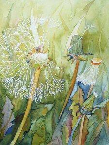 Dandelion (c) #watercolor by Frank Koebsch, 24 x 32 cm, sold