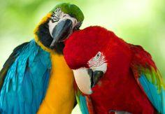 #4k macaw hd wallpaper (3991x2765)