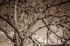 Tree moon.