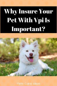 pet insurance, the importance of pet insurance, pet health tips Pet Health Insurance, Animal Shelter, Pet Shelter, Business Card Logo, Pet Care, Health Tips, Husky, Best Friends, Puppies